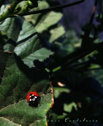 1151 © ladybug plant microcosm