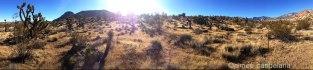 2168©-cacti-sunlight-panorama