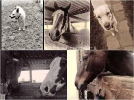 horse-and-dogs-Collage-copy